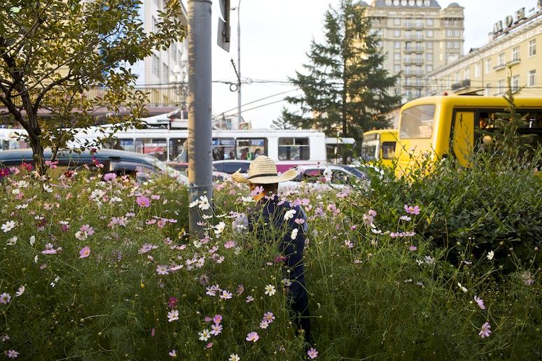 Peace Avenue flowers