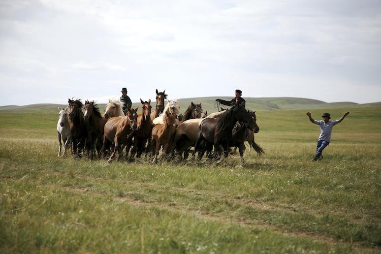 Mongolia Steppe 5