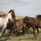Mongolia Steppe 6